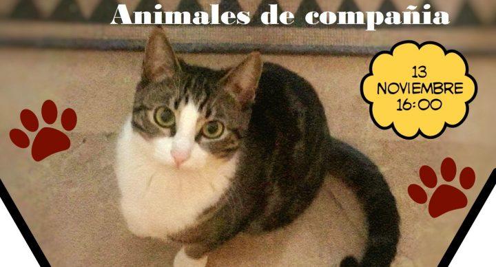 CHARLA SOBRE REGULACIÓN ADMINISTRATIVA DE LOS ANIMALES DE COMPAÑÍA EN LA COMUNIDAD VALENCIANA